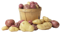 Taters, taters, white, red, yellow and more